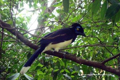 Aves en Iguazú