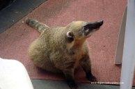 Fauna Iguazú